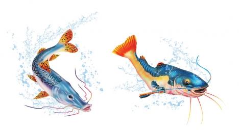 fish Illustrated