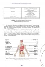 Proteção Radiológica no diagnóstico à terapia